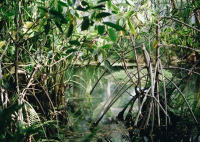 fkd_mangrove