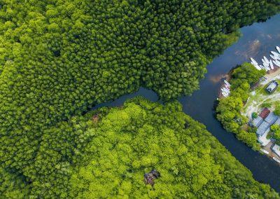 fkd_mangrove2
