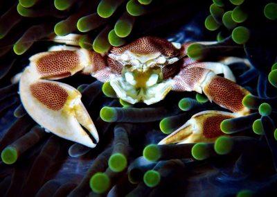 Crab(2)