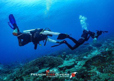 Dive(30)