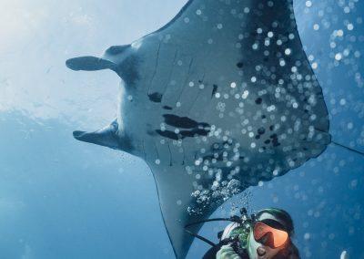 Manta ray(2)