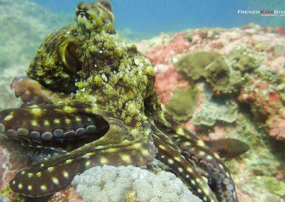Octopus(2)