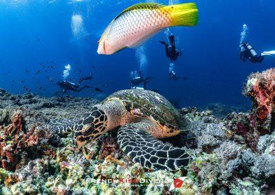 Turtle(1)